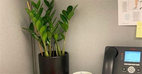 plants  cubicles   plant experts
