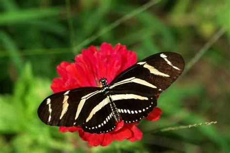 10 Most Unusual And Beautiful Butterflies In The World