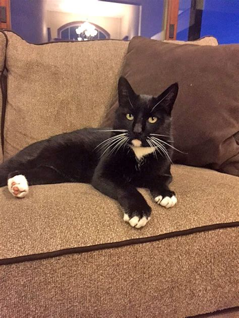 lost utah cat crosses mountain range  return  family