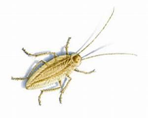Ungeziefer Im Haushalt Fotos : d terminer les insectes nuisibles dans la maison gvb infomaison ~ Whattoseeinmadrid.com Haus und Dekorationen