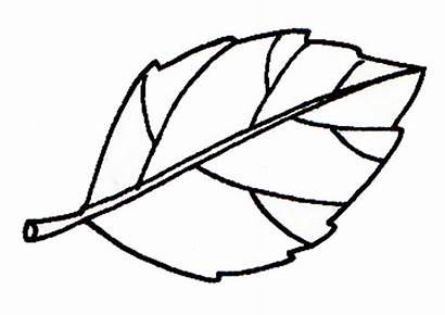 Daun Gambar Clipart Sketsa Mewarnai Kartun Apel