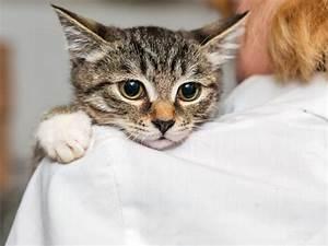 Laver Un Chaton : mon chat est peureux comment l aider surmonter ses ~ Nature-et-papiers.com Idées de Décoration