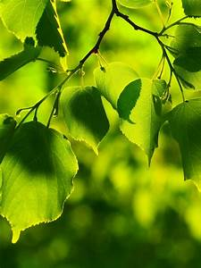 Gree Nature Wallpaper For Mobile Phone – One HD Wallpaper ...
