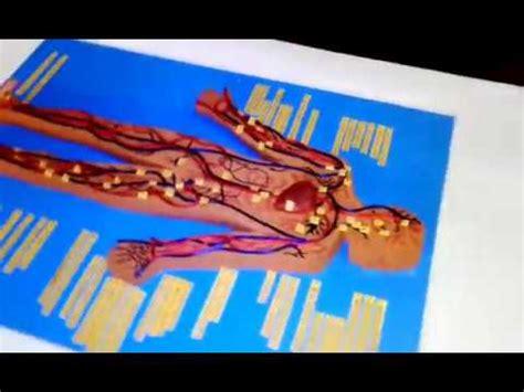 maqueta sistema circulatorio youtube