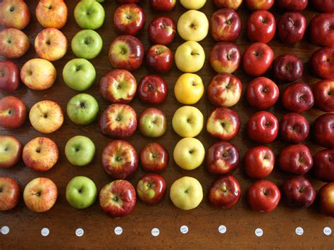 apples apple pie food pies lab types tart various colors taste sweets baking array texture perfect they them kenji