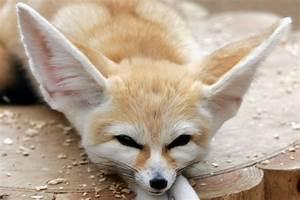 15 World's cutest endangered animals (15 pics) | Amazing ...