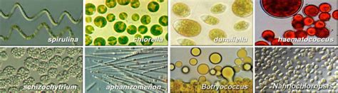 scalable algae microfarms part  algae industry magazine