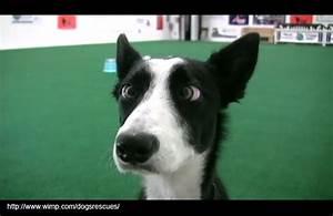 Cross eyed dog | Pets/animals | Pinterest