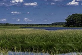 Looking Across the Wetlands at George Meade Wildlife Refuge image - Free stock photo - Public ...