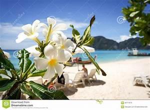 Hawaiian Flowers On The Beach Wallpaper