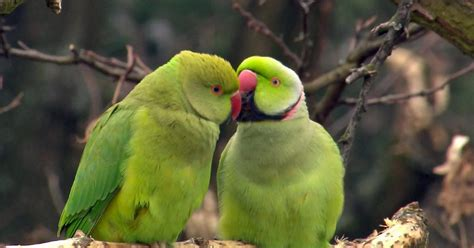 papageien  wie wissen ard das erste