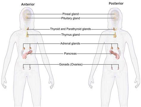 endocrinology wikipedia