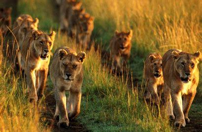 pilanesberg national park whats   joburg