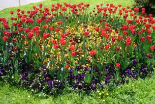 file flower bed moscow jpg