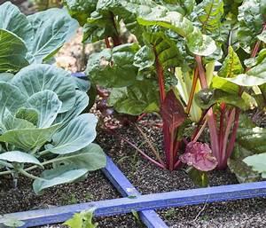 Plantes Amies Et Ennemies Au Potager : plantes compagnes les plantes amies au potager d tente ~ Melissatoandfro.com Idées de Décoration