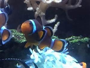 Serrurier Saint Malo : nemo ce beau poisson yelp ~ Premium-room.com Idées de Décoration