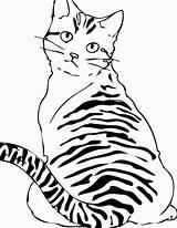 Poes Tabby Kleurprenten Paarden Poezen Topkleurplaat Poesje Katten Poesjes Martinchandra Animalplace sketch template
