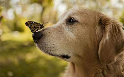 Nose Butterfly Dog Wallpapers Walls Hdnicewallpapers