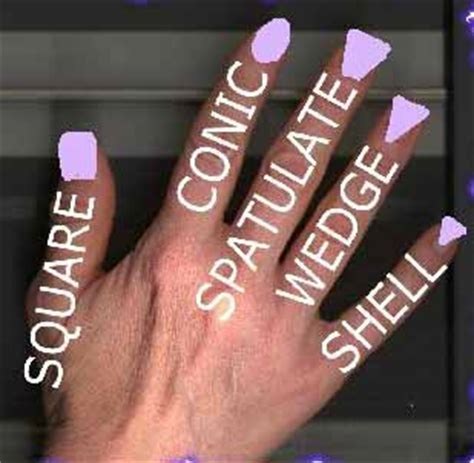 finger fingernails anatomy health palmistry crystalinks