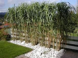 Sichtschutz Terrasse Pflanzen : balkon sichtschutz decor ~ Michelbontemps.com Haus und Dekorationen