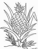 Pineapple Fruit Coloring sketch template