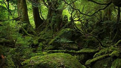 Wallpapers Desktop Forest Backgrounds Foret Rainforest Jungle