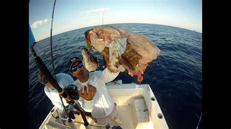 grouper goliath attacks