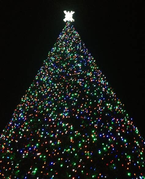 delray beach 100ft christmas tree lighting tmd