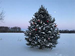 40, Incredible, Outdoor, Christmas, Tree, Decorations, For, The, Creative, Souls