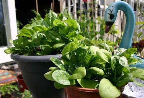 Les 20 Légumes Les Plus Faciles à Faire Pousser En Pot