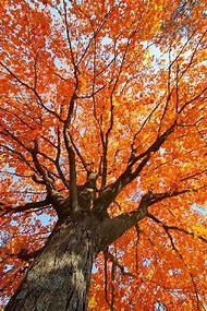 New England Fall Foliage Autumn Leaves