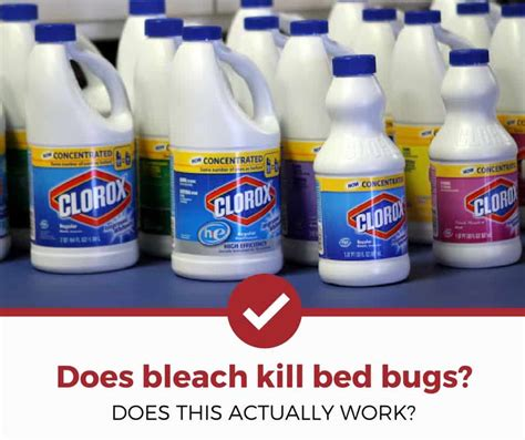 Does Bleach Kill Bed Bugs? (the Answer Might Surprise You