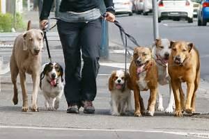 Come scegliere il giusto dog sitter for Puppy dog sitter