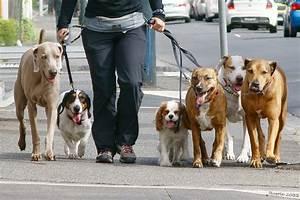 come scegliere il giusto dog sitter With babysitter dog sitter