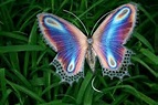 10 Facts about Butterflies   Fact File