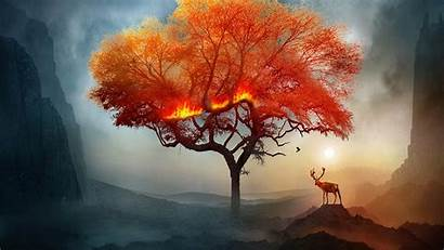 Tree Deer Fire Fantastic Wallpapers Backgrounds 1080p