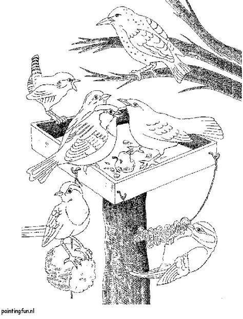 Kleurplaat Vogels In De Winter by 17 Beste Idee 235 N Vogelspotten Op Kolibries