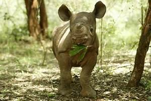 baby rhino | Fight for Rhinos