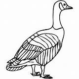 Goose Coloring Geese Pages Canadian Sheet Birds Template Samples Sheets Freecoloringsheets Templates sketch template