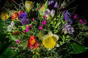 Blumen Von Der Decke Hängen : startseite blumen mardt in hamburg sasel ~ Markanthonyermac.com Haus und Dekorationen