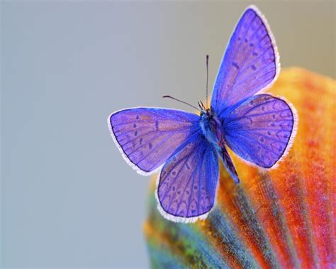Beautiful Animated Butterfly Wallpapers - beautiful butterfly wallpapers for desktop wallpapersafari