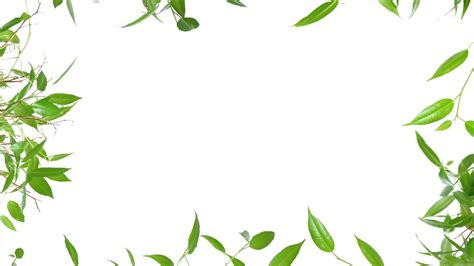 Tree Wallpaper Clipart by Green Leaves Background Clipart Clipground