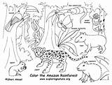 Habitat Coloring Animal Pages Getdrawings sketch template