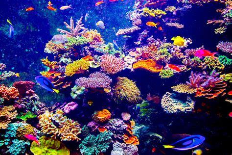 水族館の美しいサンゴ