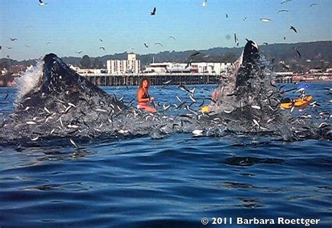Surfer Almost Swallowed By Whale | Surfer, Whale video ...