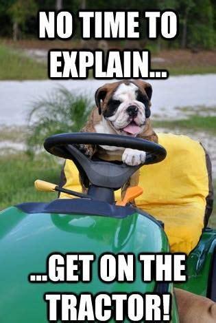 bulldog meme ideas  pinterest funny bulldog