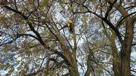 Baum Pflege by Baumpflege Baumpflege Henken