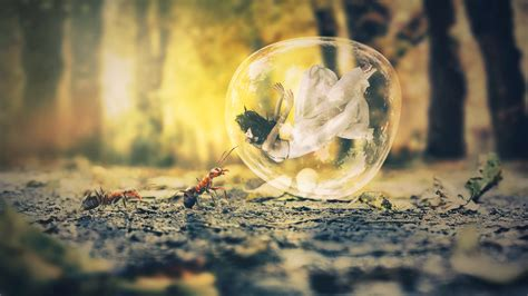 bubble ant dream  wallpapers hd wallpapers id