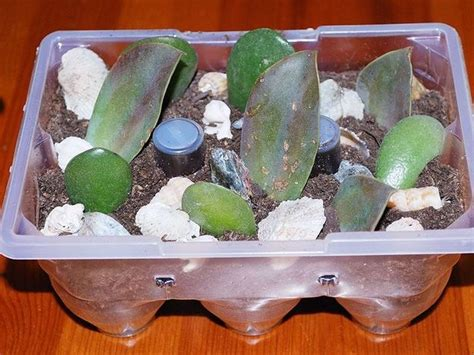 piccolo giardino zen creiamo un mini giardino zen con materiali di recupero