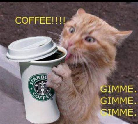 However, drinking more of that can cause negative effects on one's health—particularly their lifespan. I drink too much coffee! | Cat coffee, My coffee, Coffee ...